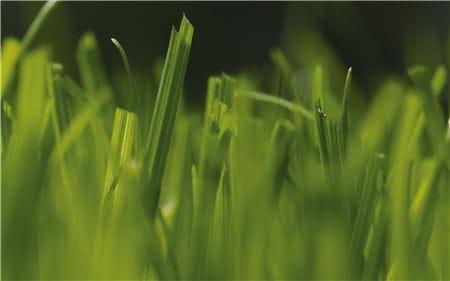 EM-Rasenpflege-013-30cm.eps