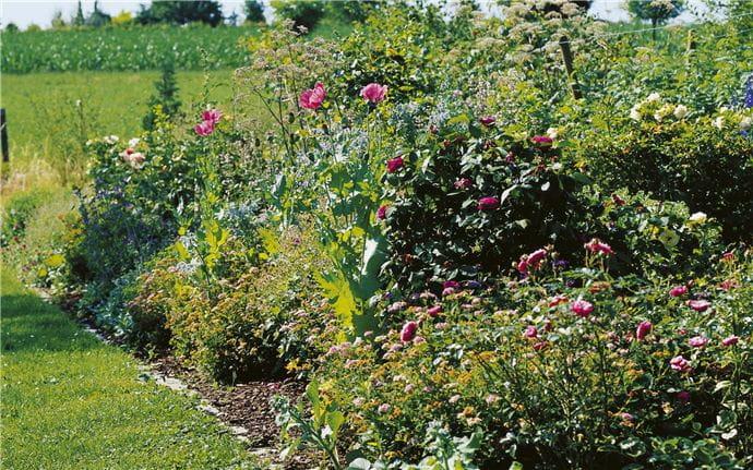 EM-Garten-005-15cm