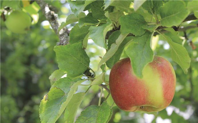 Apple-E-010
