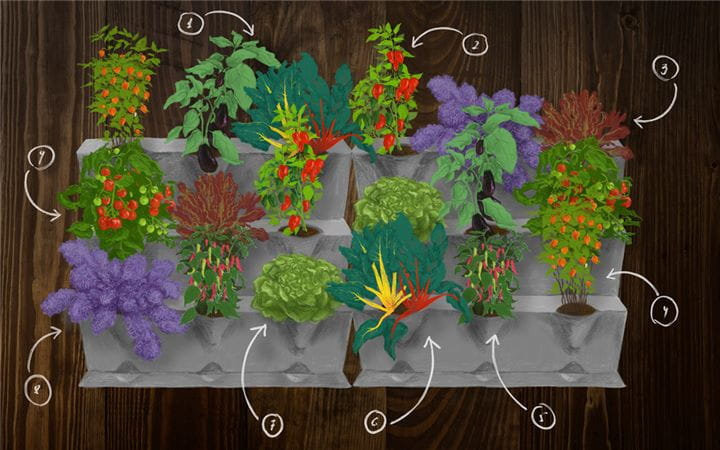 Delicious planting NatureUp