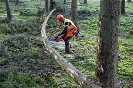 Cutting when tension in fallen tree