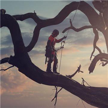 一些图像 - 站在树上的jo  -  silouette