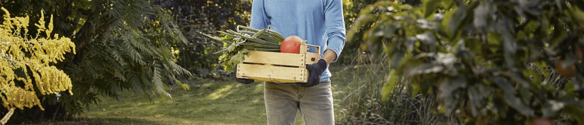 Que planter au balcon et au jardin en octobre ? - GARDENA