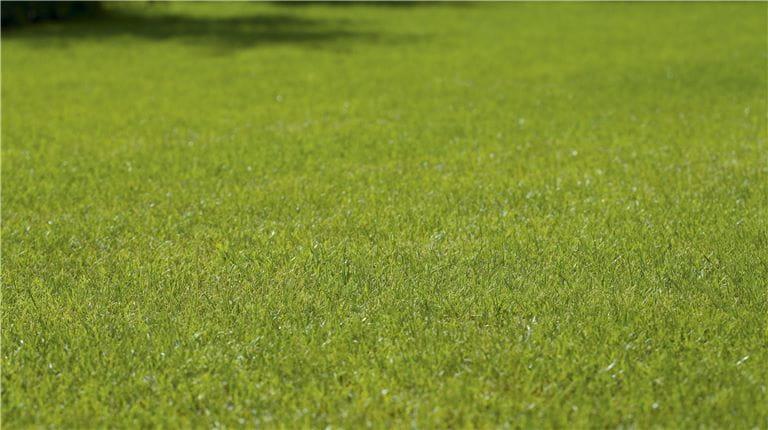 Gelbe Stellen auf dem Rasen vermeiden