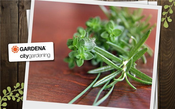 Rosemary Tea Header