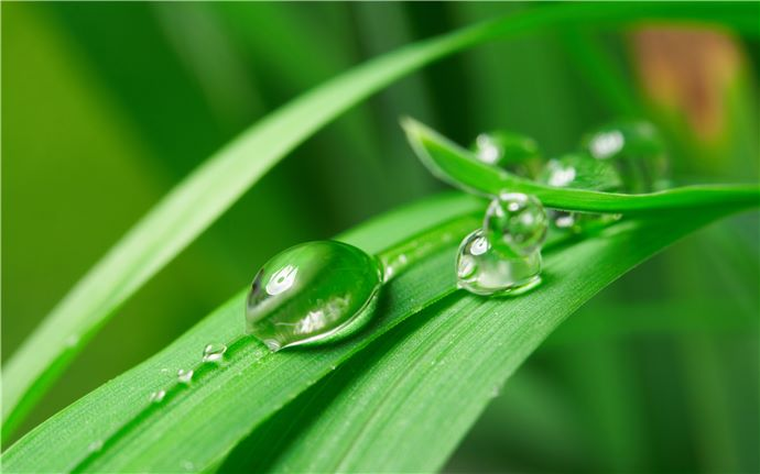 Blade of grass with water droplets