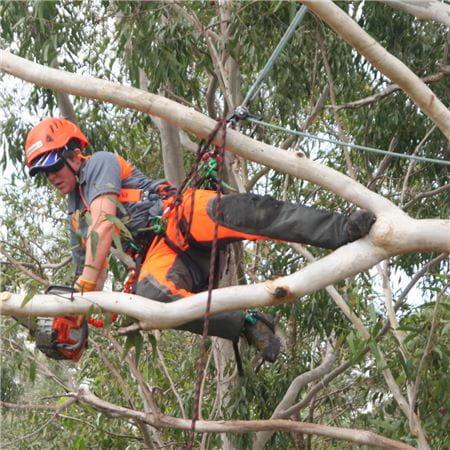 凯·马丁,澳大利亚树木学家