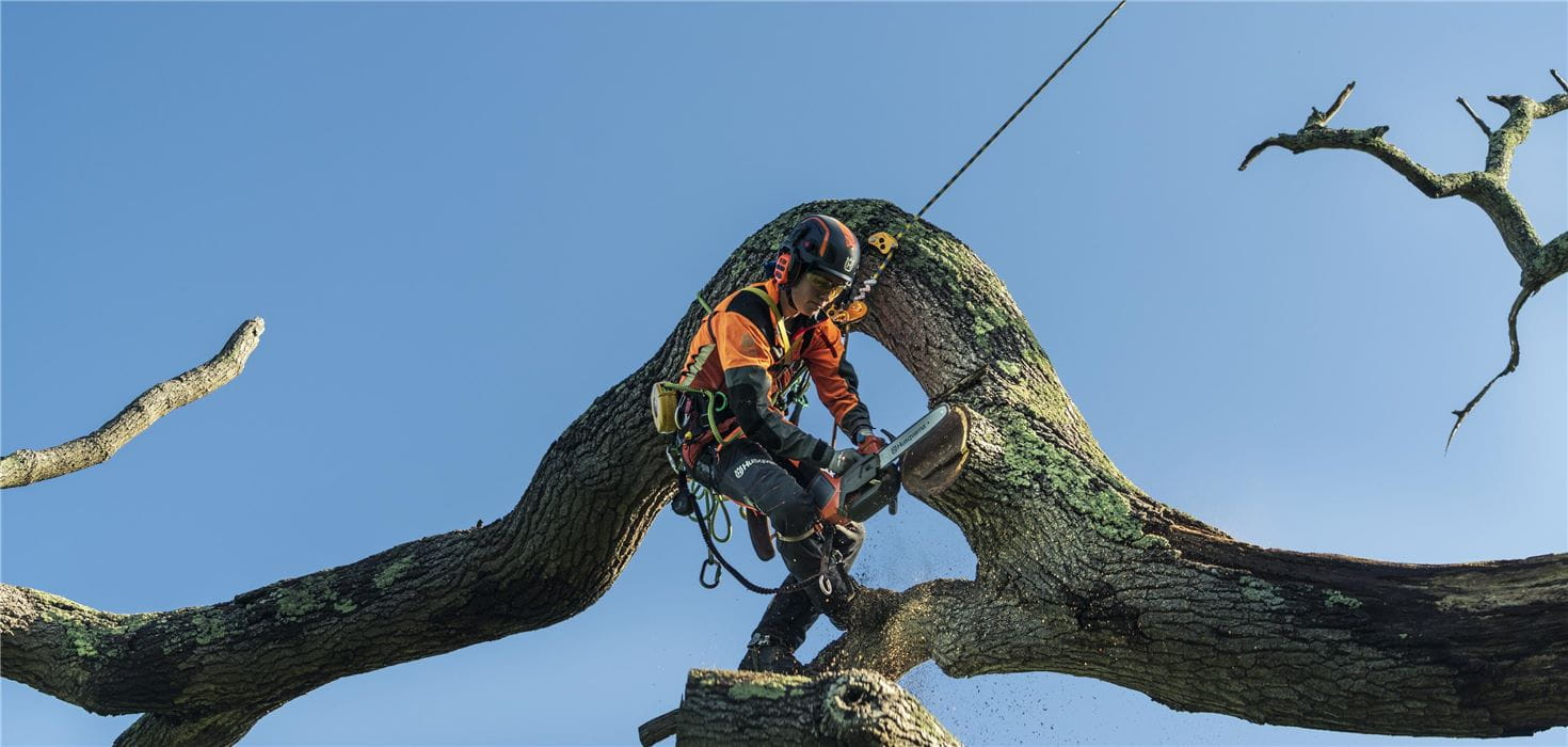 Campaign image - Jo sawing big log up in tree