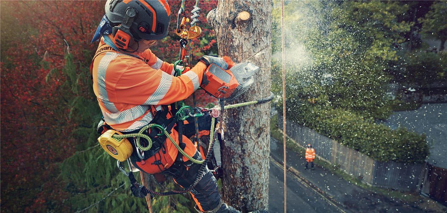 树木手柄链锯的树木植物师T540ixp
