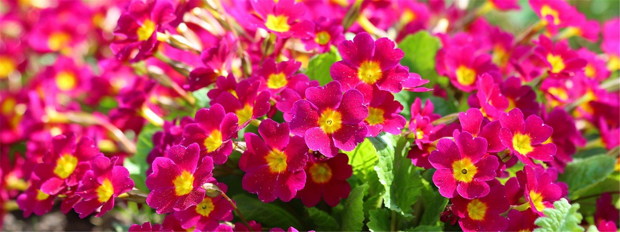 Plantes Pour Terrasse Sud Est que planter selon l'exposition de sa terrasse ou balcon