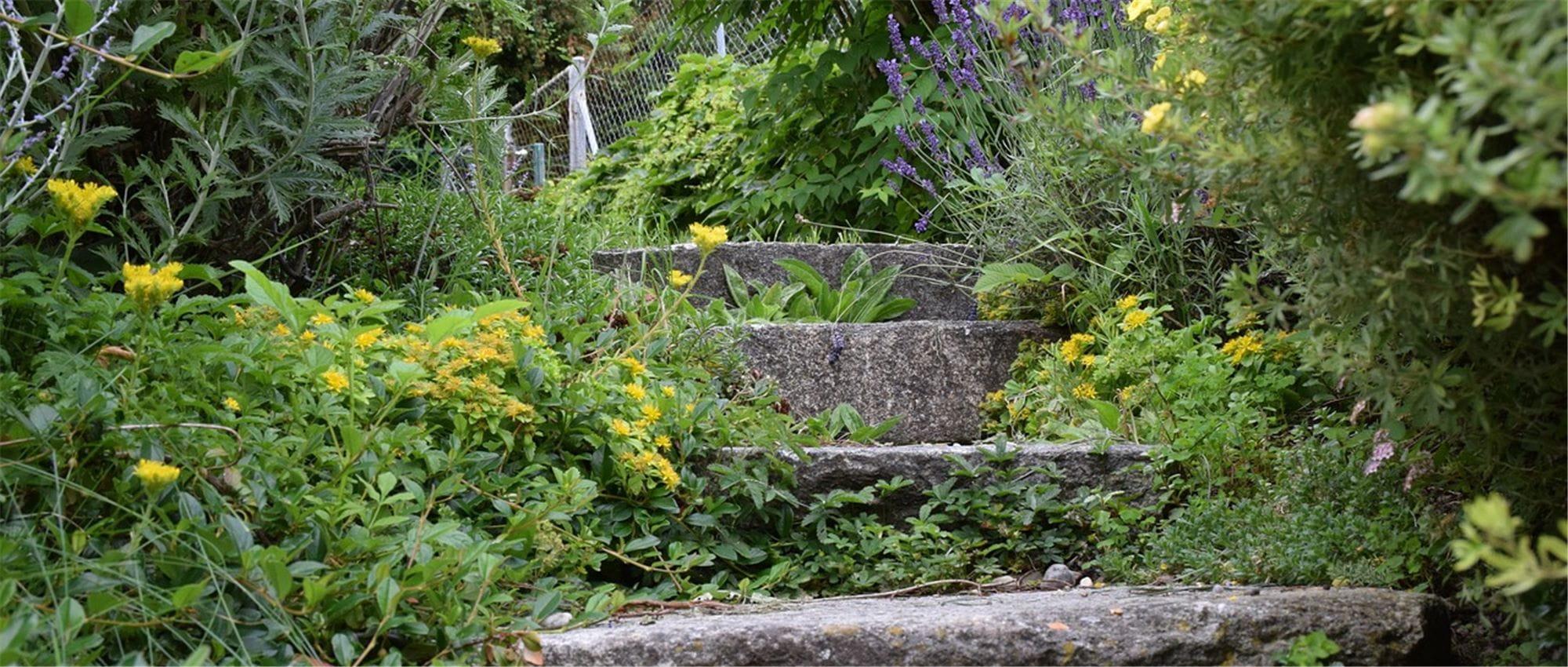 Jardin En Pente Comment Faire comment aménager un jardin en pente ? - gardena