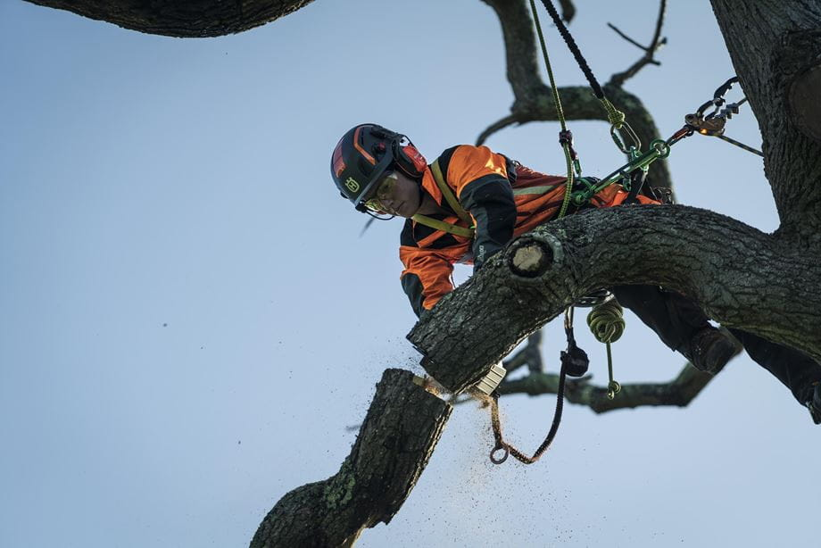 Campaign image -Jo up in tree taking down big log