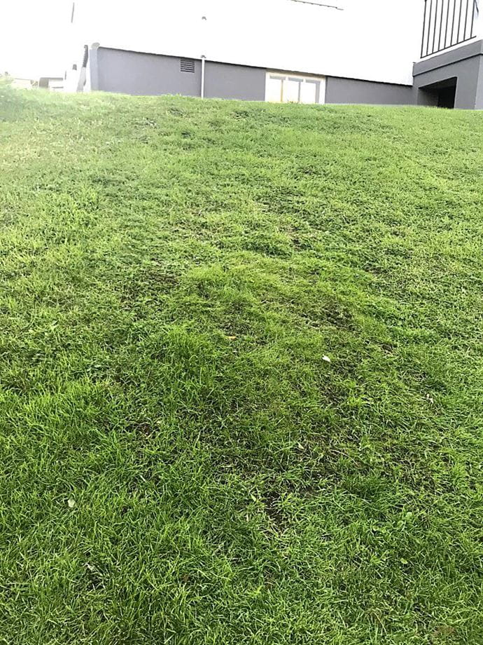 Hybrid grass, Before and after