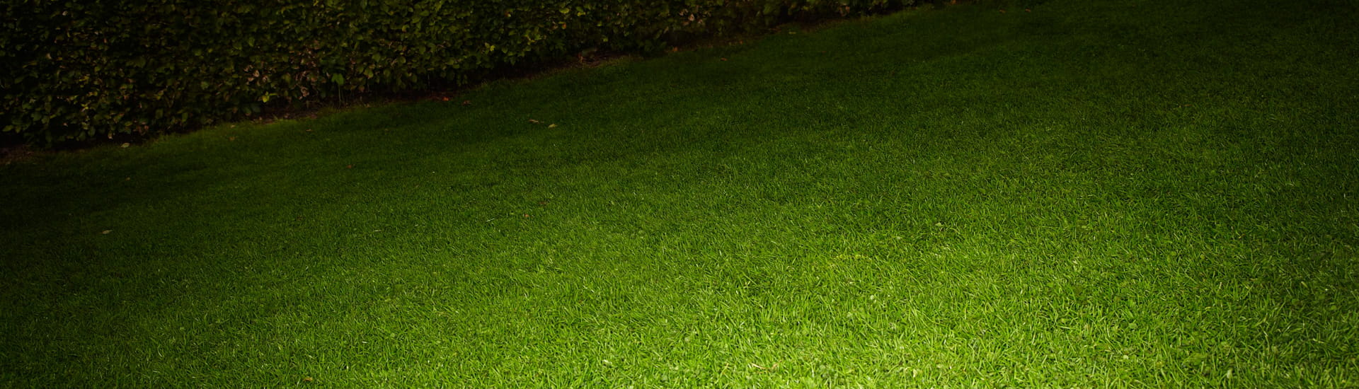 Dark hedge and green grass