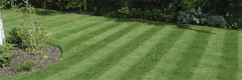 Grass mowed in straight lines