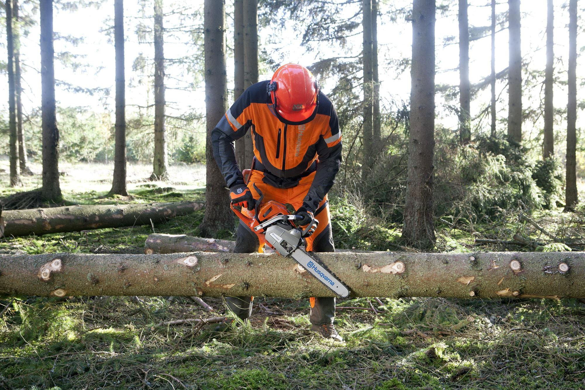 Images Working with chainsaws, part 2