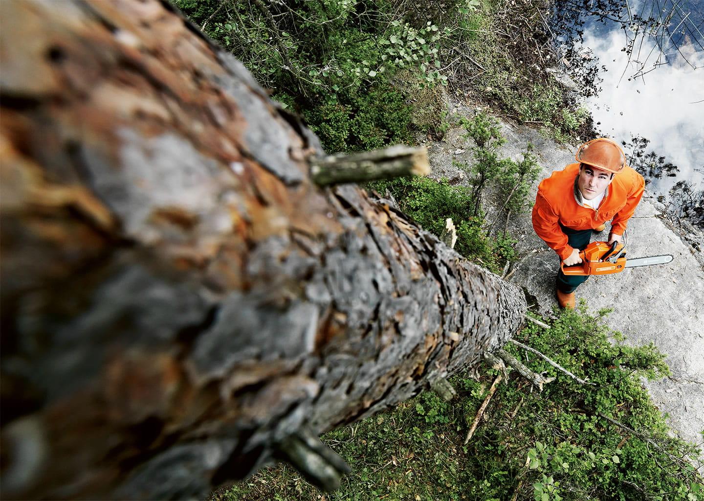 вовлеченный картинки пилят лес завершенности интерьера